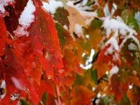 Sügis-talvine värvidemäng
